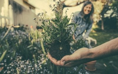 Is it time to tend your garden?